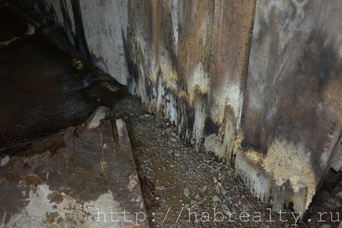 грибок в подвале УК Сервис-Центр Хабаровск