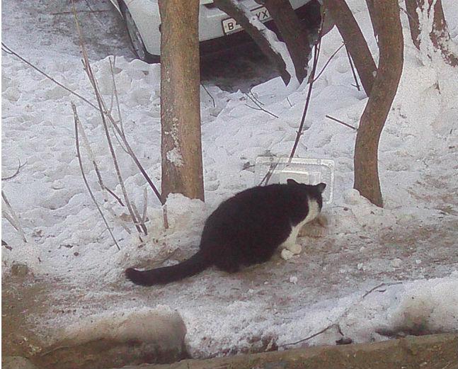 подкармливаю котов Хабаровск-2