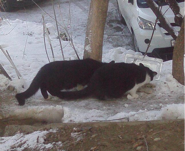 подкармливаю котов Хабаровск