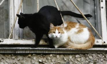 Количество животных в квартирах хотят ограничить